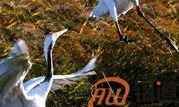 甘肃祁连山自然保护区已退出89宗持证矿业权