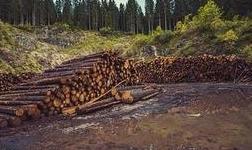 让重大决策部署在自然资源领域落地见效―论学习贯彻中央经济工作会议精神