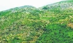 退矿还绿、探矿护绿、采矿复绿 洛阳全力推动绿色矿山建设