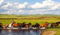 内蒙古通辽:培育全产业链条 推动多元化发展