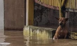 印尼突发大洪水 镍矿装船、镍生铁厂影响几何?