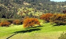 Orestone开始在智利探索铜金项目