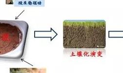 赤泥堆场无土原位修复技术――科技助力铝工业生态文明建设