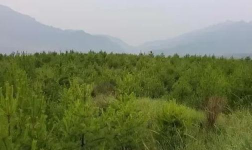 山西宁武县宽草坪铝矿积极履行国企担当 致力打造现代化绿色矿山
