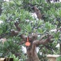 中旺厂家销售1100园林线罗汉松专用铝线