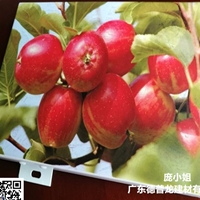 水果连锁店连环画喷绘苹果_树木铝单板密拼