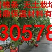 农用岩棉块新技术培育蔬?#26031;?#26524;