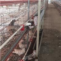 全自動清糞機 養殖場自動清糞機