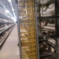 蛋雞養殖設備