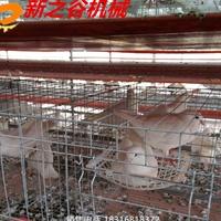 白鴿蛋雞清糞喂料一體機  自動化養殖機械