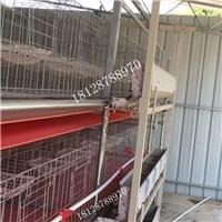 規模化養雞設備輸送帶清糞機