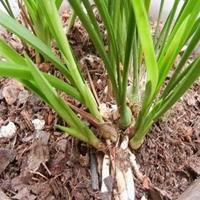 生产松树皮滤料松鳞厂家天然松树皮填料